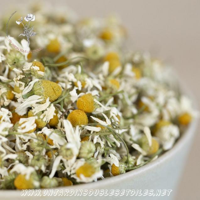 Tisane de fleurs de camomille matricaire : Tisanes simples Camomille matricaire