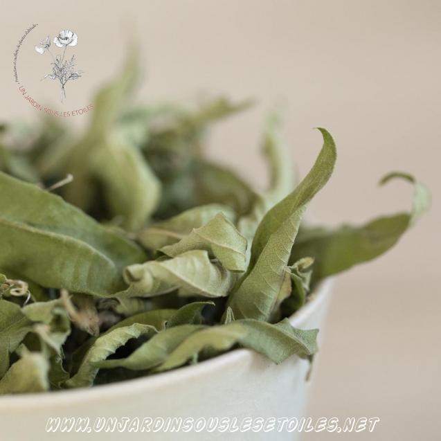Tisane de feuilles de verveine : Tisanes simples Verveine