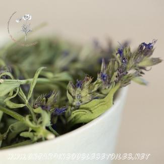 Tisane d'hysope : Tisanes simples Hysope