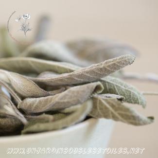 Tisane de sauge : Tisanes simples Sauge